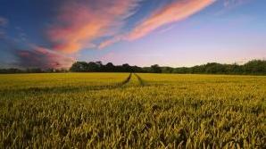 Embora sejam conceitos próximos, agrário e agrícola se diferenciam conforme aos processos em que dizem respeito.